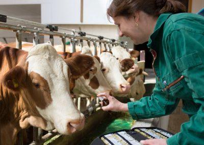 Homöopatie, ganz wichtig für unsere Tiere