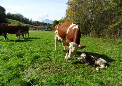 eine Geburt auf der Weide